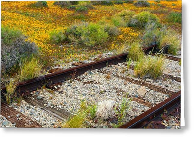 Spring Wildflowers And Railroad Tracks Greeting Card