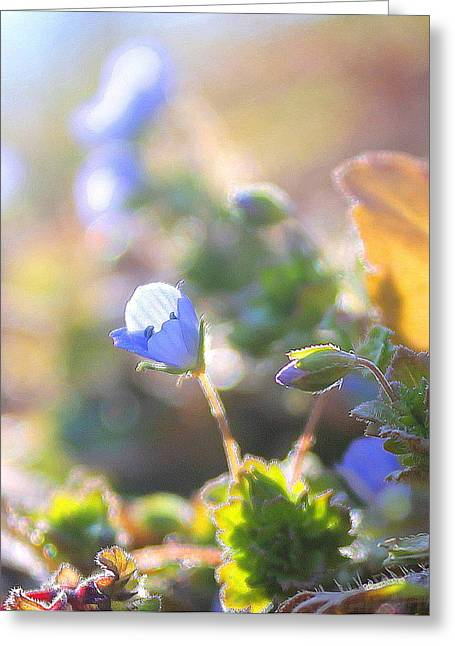 Greeting Card featuring the photograph Spring Wildflowers by Candice Trimble