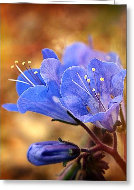 Spring Wildflowers - The Desert Bluebells Greeting Card