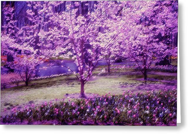 Spring Wonderland Pastel. Garden Keukenhof. Netherlands Greeting Card by Jenny Rainbow