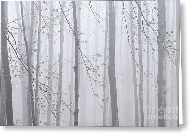 Greeting Card featuring the photograph Spring Woodland Fog 1 by Alan L Graham