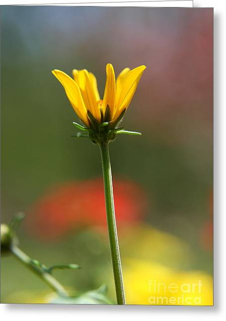 Spring Yellow  Greeting Card by Neal Eslinger