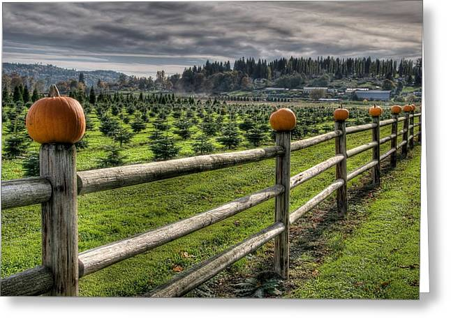 Springhetti Road Pumpkins Greeting Card by Spencer McDonald