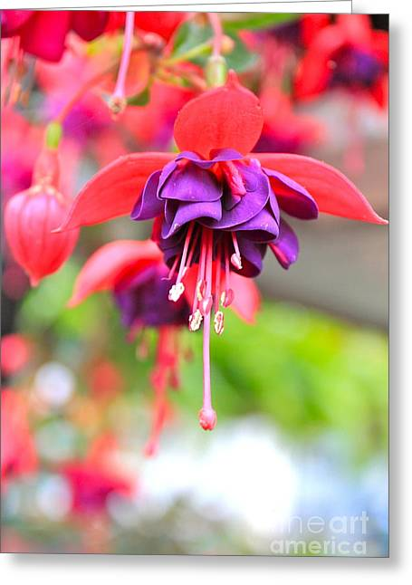 Springle Bells Greeting Card by Jay Nodianos