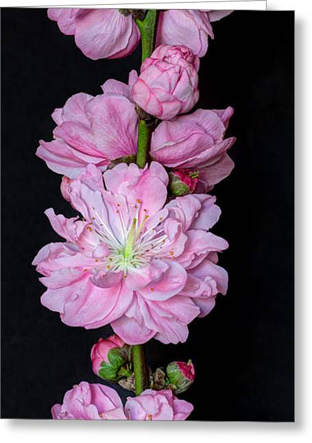 Spring's Arrival  Greeting Card by Heidi Smith