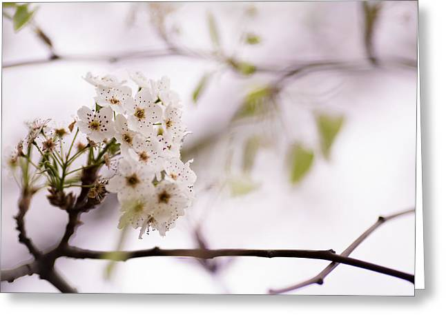 Springs Blossom  Greeting Card by Mike Lee