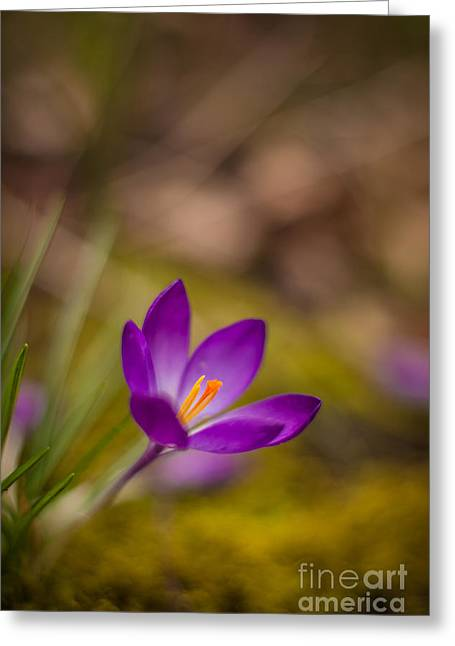 Springs Color Solitary Greeting Card