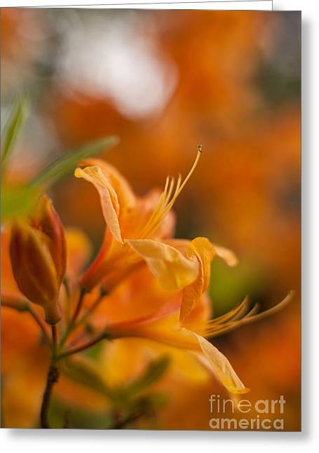 Springs Glory Greeting Card