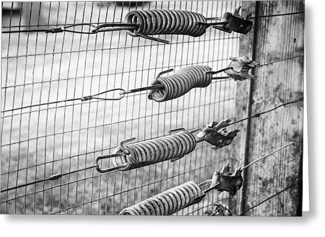 Springs On The Fence Greeting Card