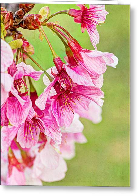 Spring's Show Greeting Card by Heidi Smith