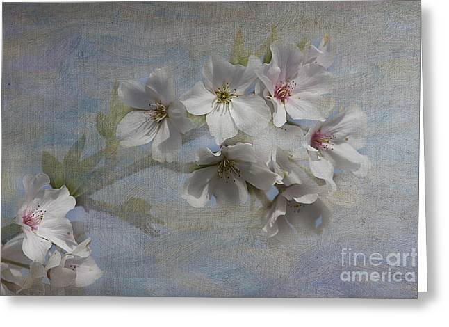 Springtime Greeting Card by Anne Rodkin