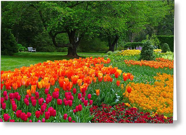 Springtime At Longwood Gardens Greeting Card by Dan Myers