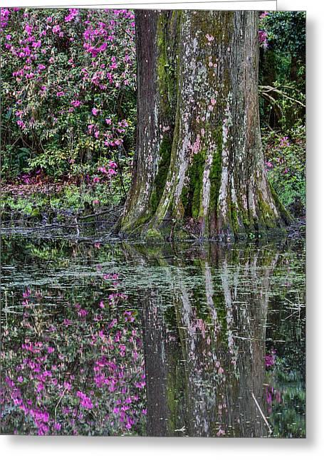 Springtime Azalea Blooming Magnolia Greeting Card