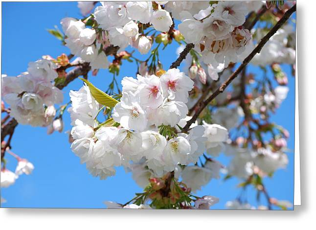 Springtime Blossoms Greeting Card