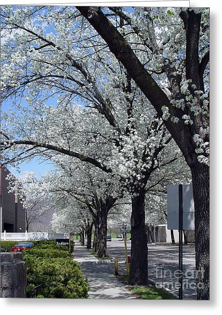 Springtime Corning Ny 2 Greeting Card