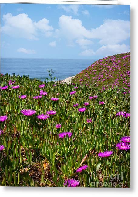 Springtime In Half Moon Bay Greeting Card by Ellen Cotton