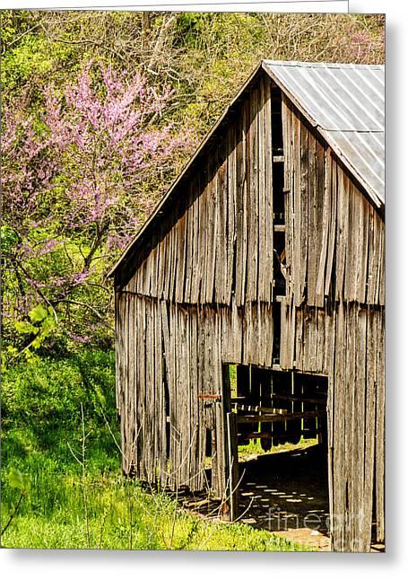 Springtime In Kentucky Greeting Card