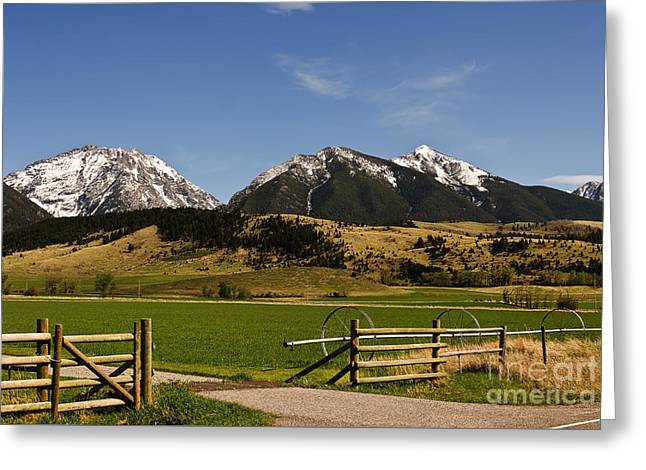 Greeting Card featuring the photograph Springtime In Montana by Sue Smith