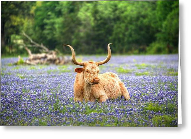 Springtime In Texas Greeting Card