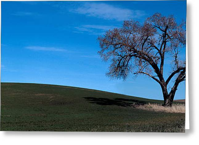 Springtime In The Palouse Greeting Card by Sharon Elliott