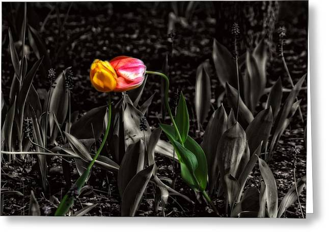 Springtime Kiss Greeting Card by Dan Quam