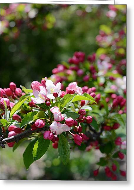 Greeting Card featuring the photograph Springtime by Linda Mishler