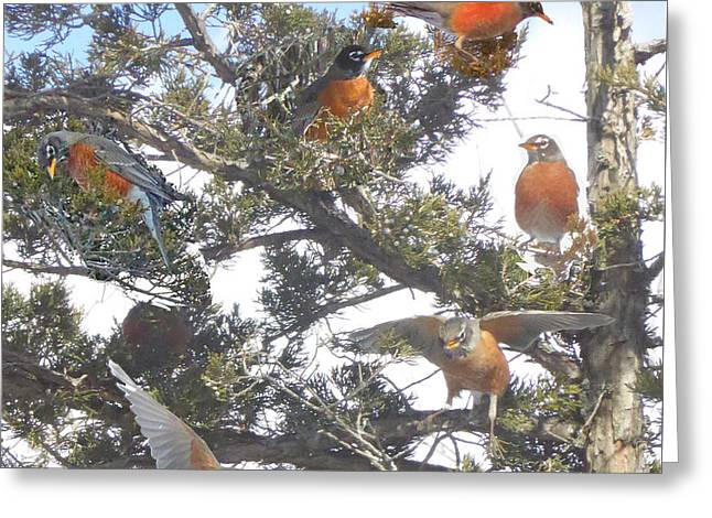 Springtime Moments- Birds Of A Feather Greeting Card by Patricia Keller