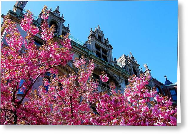 Springtime On Commonwealth Avenue Greeting Card