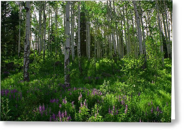 Springtime On The Grand Mesa Greeting Card by Ernie Echols