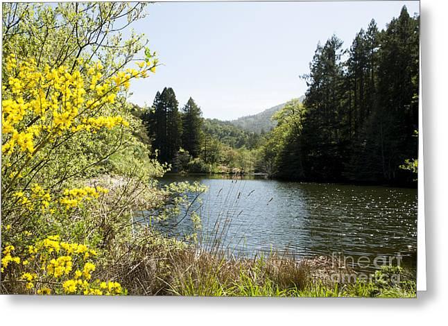 Springtime Phoenix Lake Greeting Card by Juan Romagosa