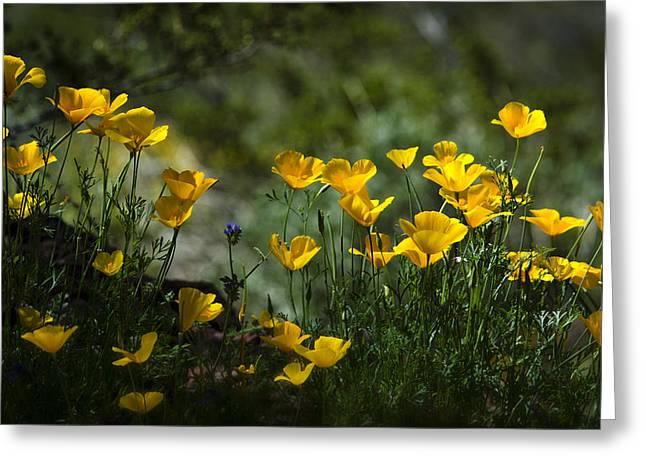Springtime Poppies  Greeting Card by Saija  Lehtonen