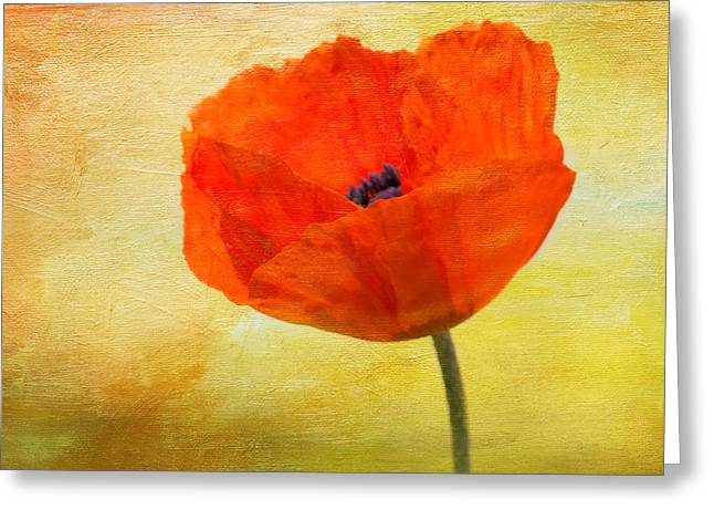 Springtime Poppy Beauty Greeting Card