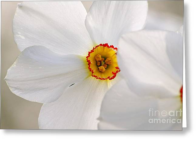 Springy  Greeting Card by Jay Nodianos