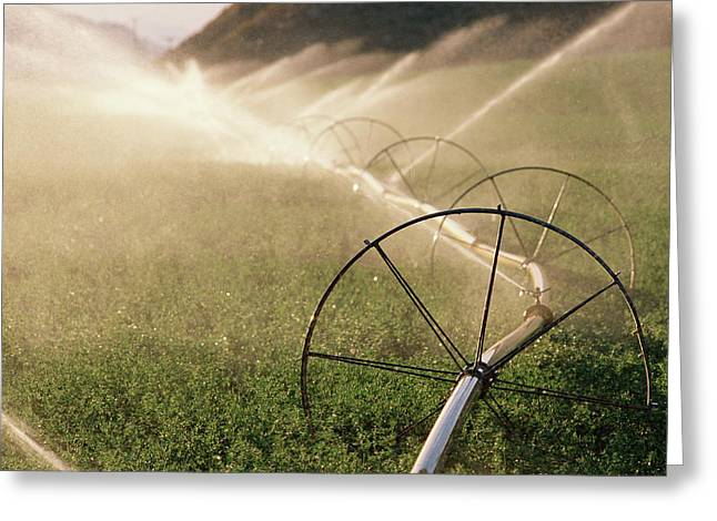 Sprinkler System With Wheels Watering Greeting Card by Panoramic Images