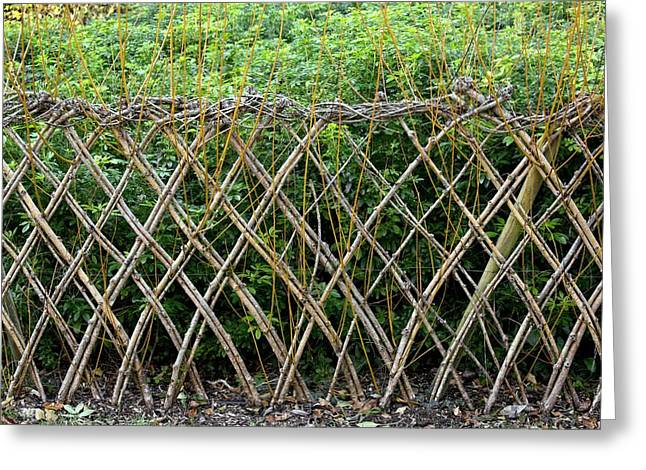 Sprouting Willow Fence Greeting Card by Bob Gibbons
