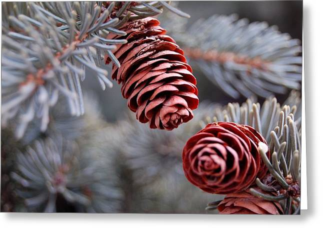 Spruce Cone Closeup II Greeting Card
