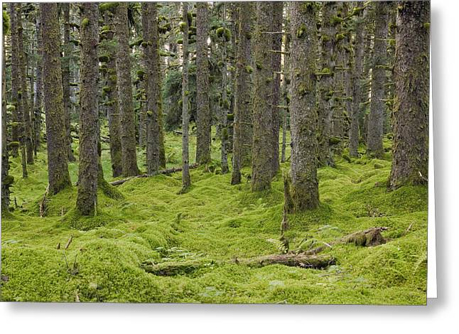 Spruce Forest & Moss Near Coast Kodiak Greeting Card by Kevin Smith