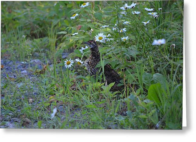 Greeting Card featuring the photograph Spruce Grouse by James Petersen