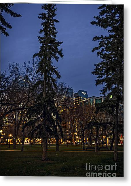 Spruce Tree At The Square Greeting Card