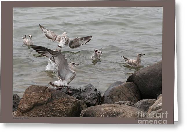 Squabbling Gulls Greeting Card by Patricia Overmoyer