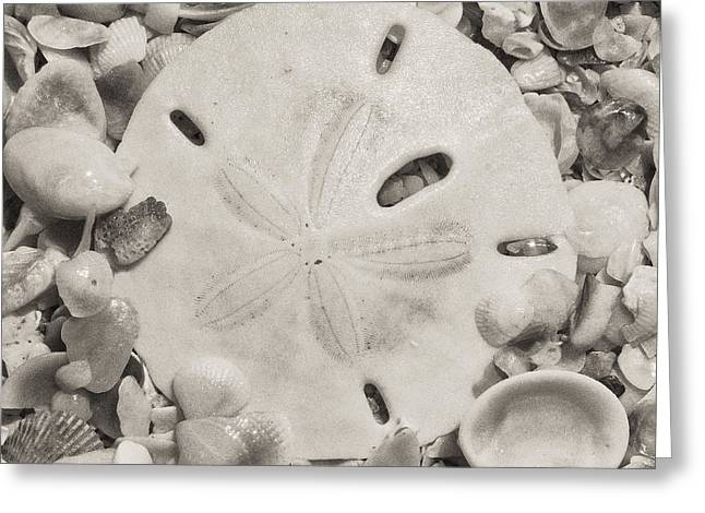 Square Sepia Sand Dollar Greeting Card