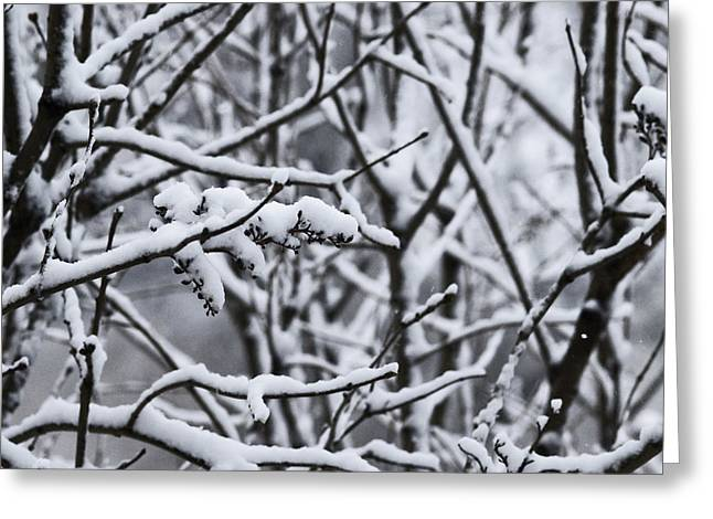 Square Snowy Branches Greeting Card by Birgit Tyrrell
