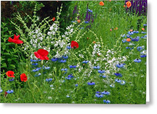 Squarely Spring Floral Garden Greeting Card by Byron Varvarigos
