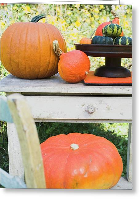 Squashes And Pumpkins On Chair And Garden Table (outdoors) Greeting Card