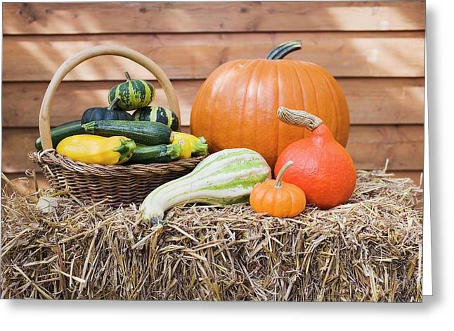 Squashes And Pumpkins On Straw In Front Of Wooden Wall Greeting Card
