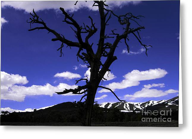 Greeting Card featuring the photograph Squigly Tree by Janice Westerberg