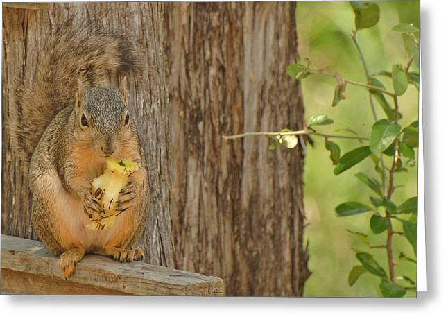 Greeting Card featuring the photograph Squirrel And Apple by Susan D Moody