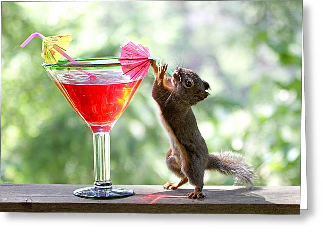 Squirrel At Happy Hour Greeting Card