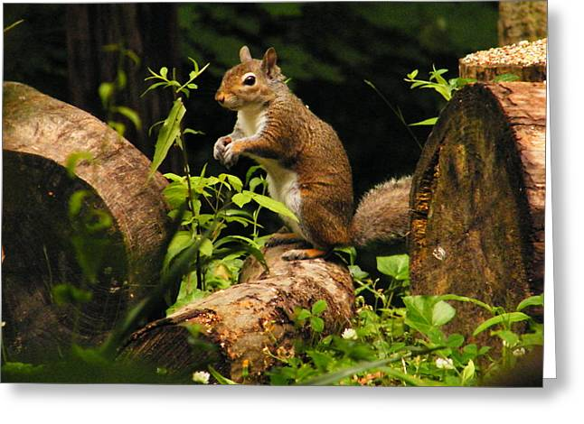 Squirrel Greeting Card by Brittany Gandee