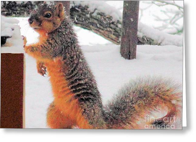 Greeting Card featuring the photograph Squirrel Checking Out Seeds by Janette Boyd